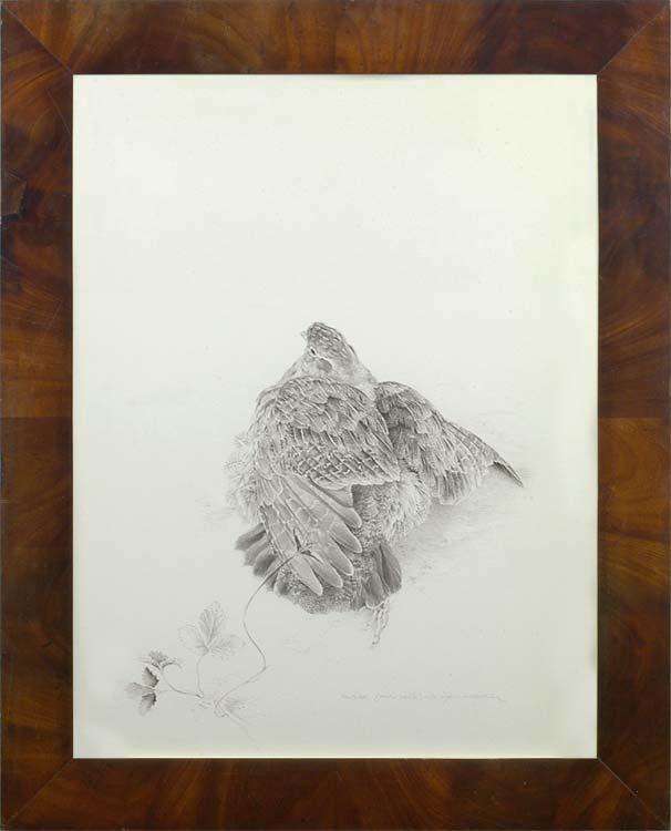 ching,-raymond---partridge