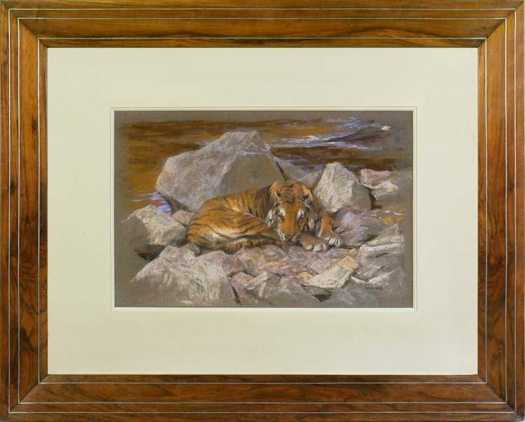 ARTHUR WARDLE A tiger resting amongst rocks